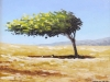 Dividivi tree