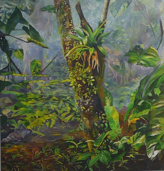 the magical rainforest by heleen cornet
